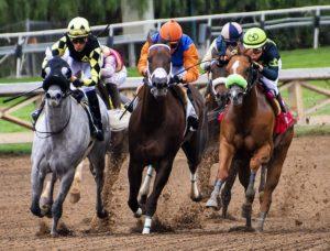 buying racehorse