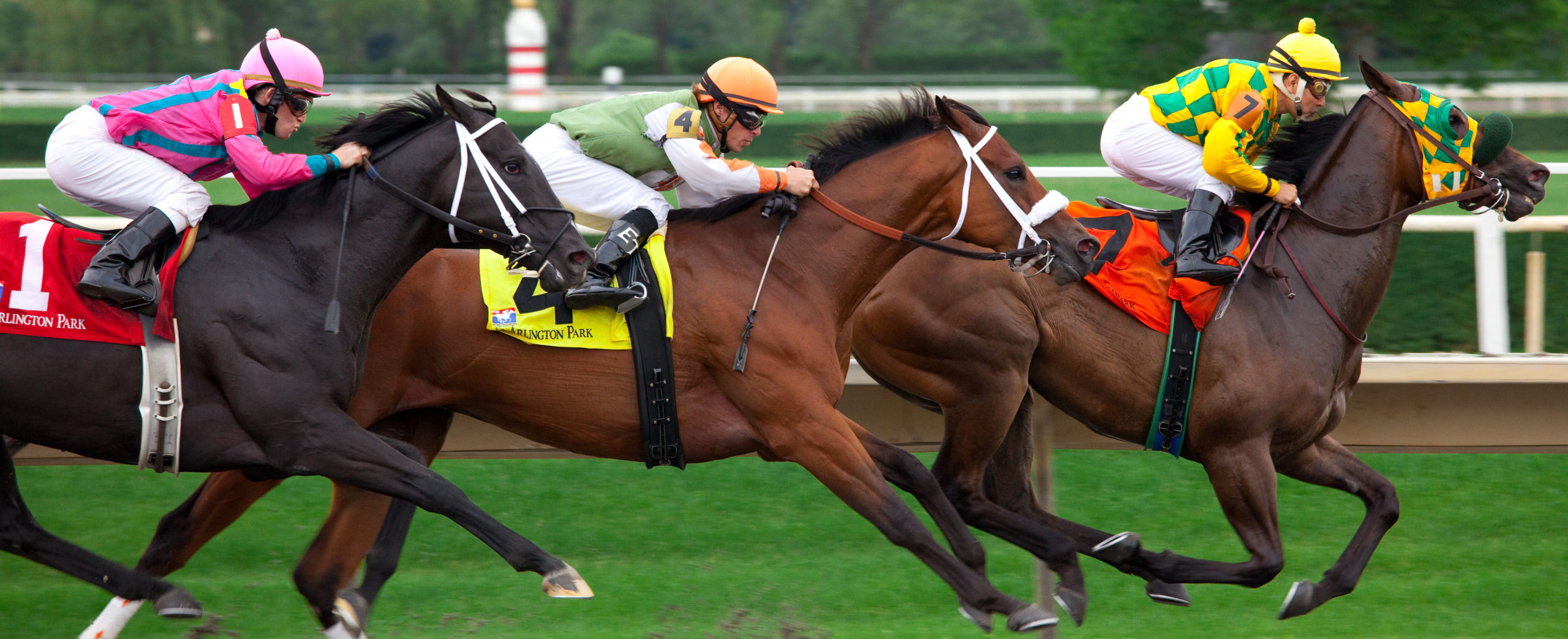 How to Claim a Race Horse?