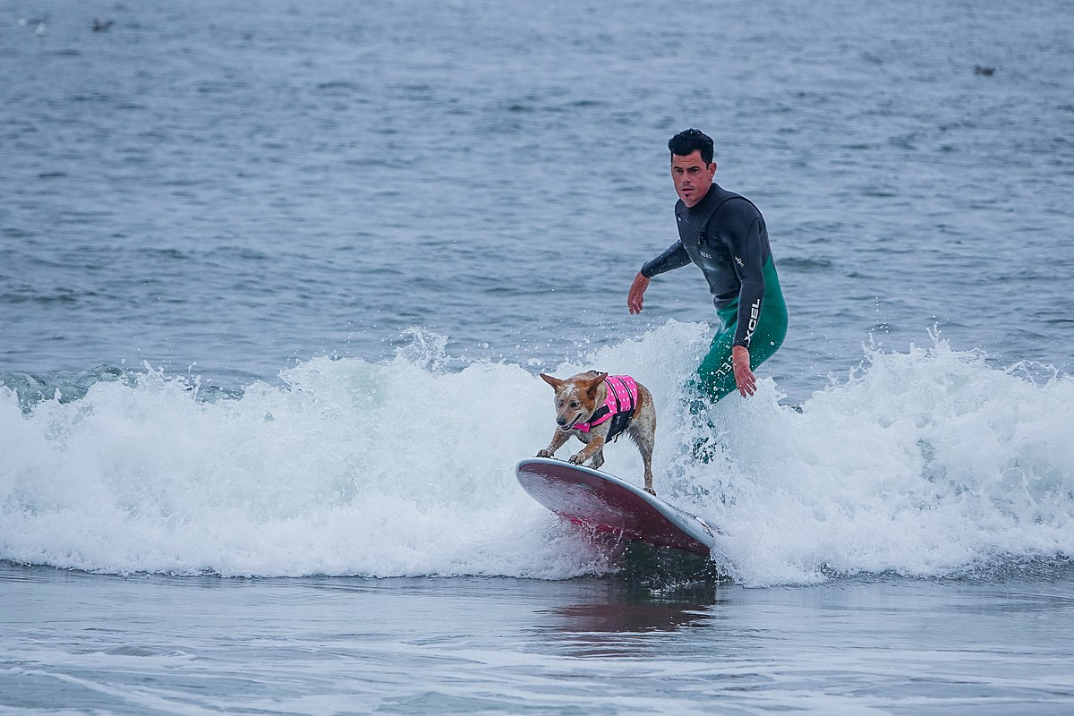 Dog Surfing: The Funny Weird Game
